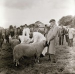 Large Crowd To Watch Holme's Ancient Sheep Fair (2 of 2)