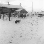 Popular Moorland Sheepdog Trials Attract The Entries