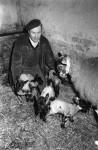 five Surprises for Farmer John